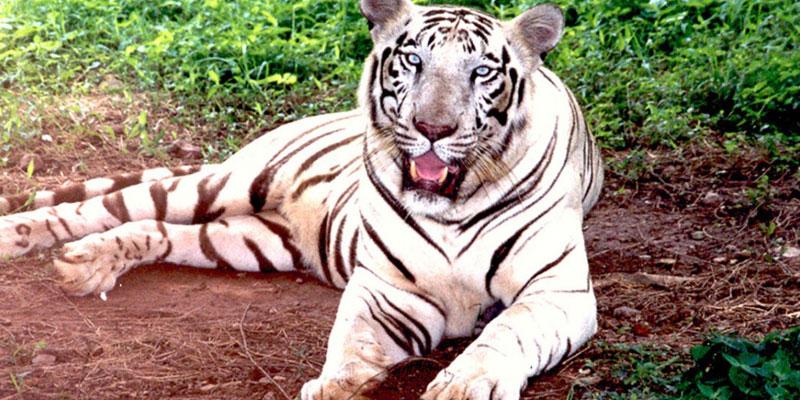wildlife-tour-odisha